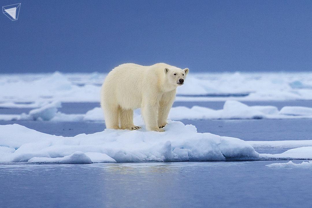 บ้านของหมีขั้วโลกถูกทำ (ละ) ลาย