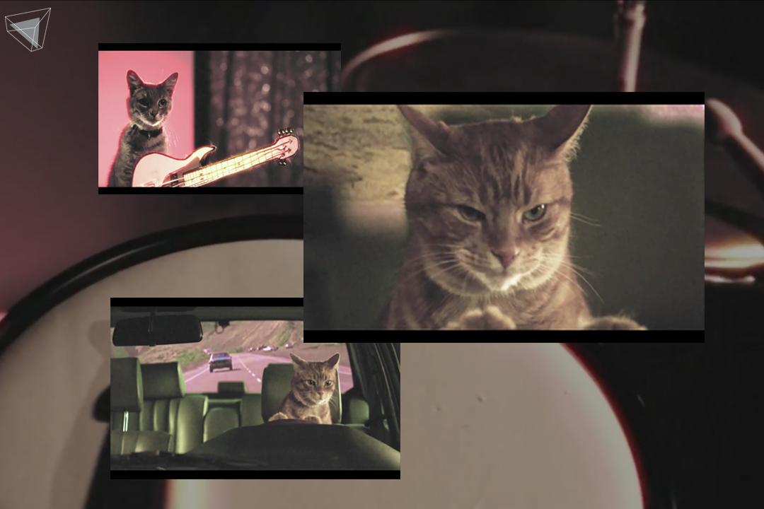Holy Fuck – Red Lights Music Video ที่มีสัตว์เป็นตัวดำเนินเรื่อง