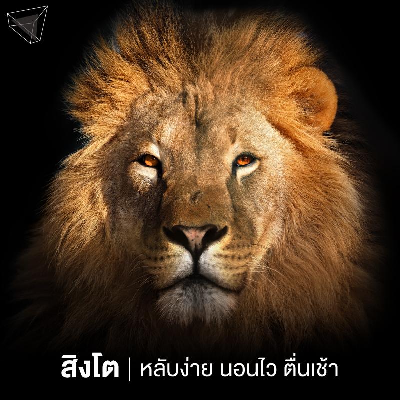 นาฬิกาชีวภาพ สิงโต