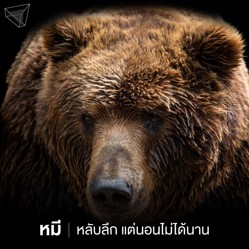 นาฬิกาชีวภาพ หมี