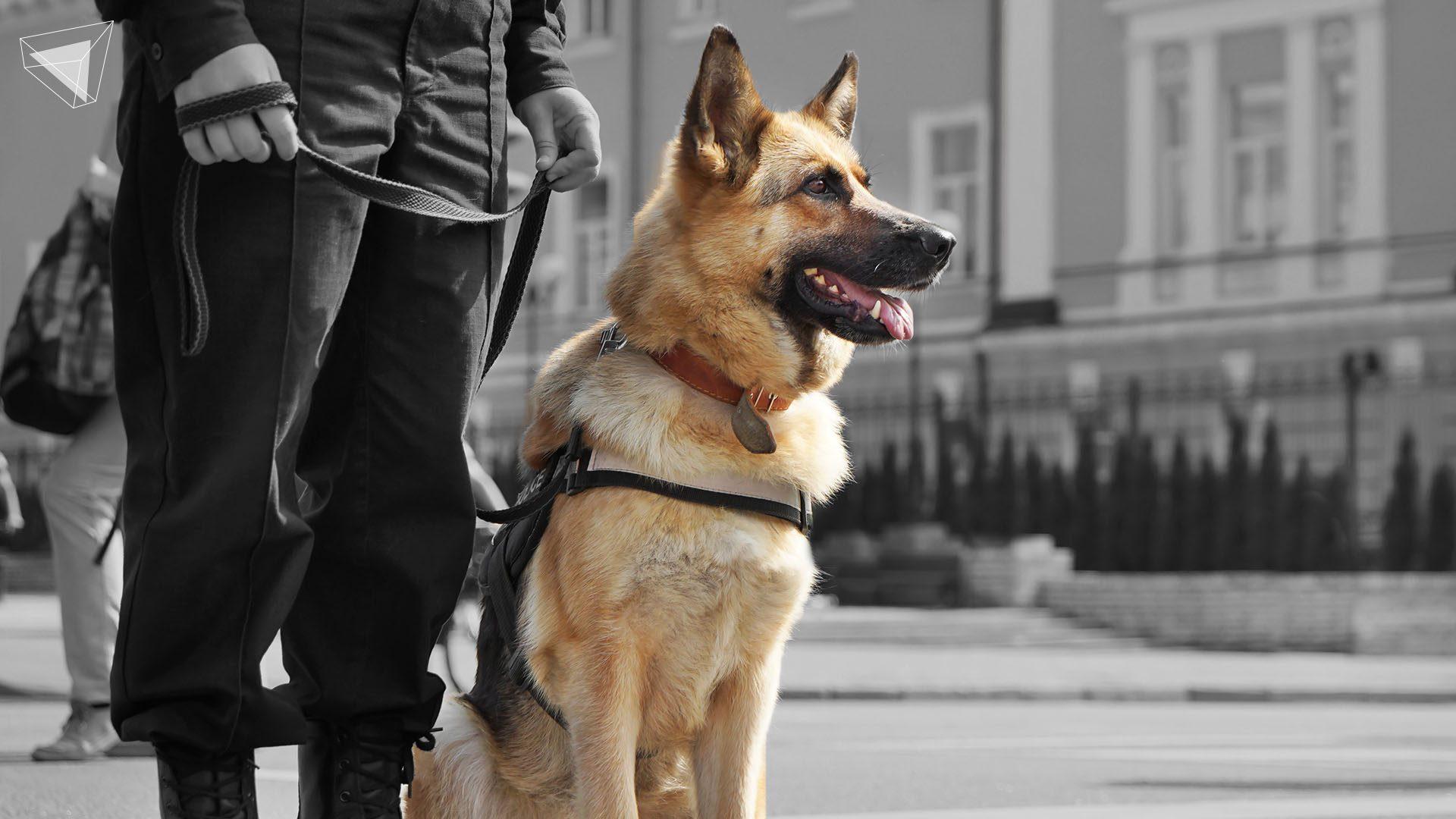 หนัง Action ที่พระเอกมีสุนัขเป็นเพื่อน